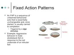 Fixed Action Pattern Example Enchanting Animal Behavior