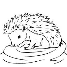 88 Best Hedgehogs Images Coloring Pages Hedgehog Hedgehogs