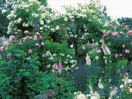 Romantic Cottage Garden Design By Claudia De Yong Award Winning Romantic Cottage Gardens