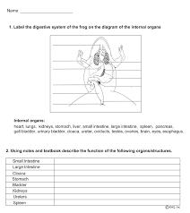 e-Tutor - Anatomy Of A Frog