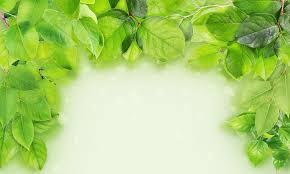 Green Branches Frame Photograph By Aleksandr Volkov
