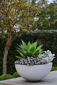 marvelous best 25 outdoor potted plants ideas on potted plants large outdoor pots for plants