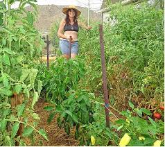 Small Picture 171 best Arizona High Desert Gardening images on Pinterest