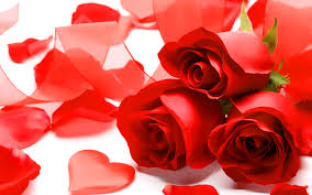 Red Rose Wallpaper For Love - Pin Posters