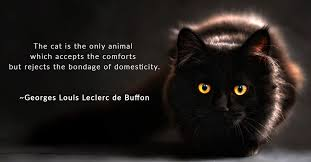 Best Cat Quotes Georges De Buffon Hepper Impressive Cat Quotes