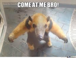 aggressive-ant-eater_o_1617805-anteater-funny-meme-26 - via Relatably.com