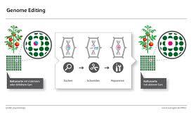 Genome Editing Genome Editing Lexikon Transgen De