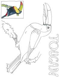 Small Picture Cloud Forest Toucan Coloring Page