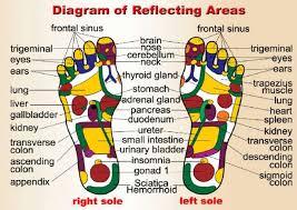 Diagram Of Foot Reflecting Areas Reflexology Foot