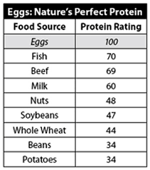 Protein Levels In Food Chart Egg Protein Chart How Many Proteins Does Egg Contain