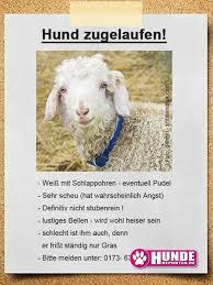 Lustige Spr He Hunde Warnschilder Spruchwebsite
