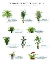 house plants safe for cats cats outstanding excellent toxic house plants toxic house plants to dogs