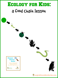 animal food chain for kids. Modren Food U003cpu003eThe Theme For The Last Week Of Our Summer Science Series With Edventures  Kids Is Ecology Try This Simple Food Chain Lesson To Introduce Ecology  For Animal Food Chain A