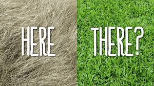 Random] The grass looks greener on the other side? | by Mridu Bhatnagar |  Medium