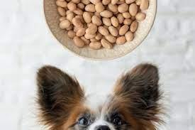 犬 大豆 食べ て いい