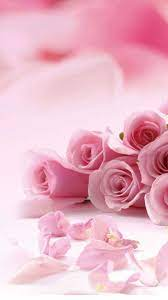 Pink Rose Wallpaper For Iphone
