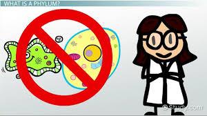 Phylum Characteristics Classification Video Lesson