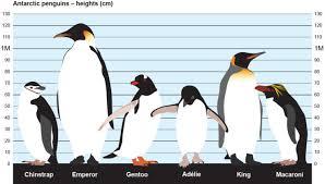 Penguins British Antarctic Survey