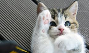 cute kittens playing wallpaper. Brilliant Playing And Cute Kittens Playing Wallpaper K
