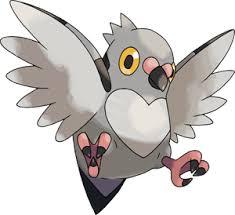 Pokemon 519 Pidove Pokedex Evolution Moves Location Stats