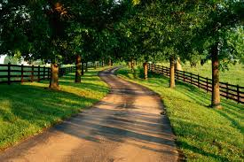 Beautiful Forest Path Background Picture New Best Hd