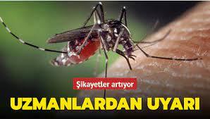 İstanbul'da Asya Kaplan Sivrisineği alarmı! Şikayetler artıyor: Uzmanlardan  flaş uyarı!