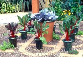 diy vegetable garden easy to container vegetable gardening ideas design ideas and vegetable container gardening for beginners diy vegetable garden soil mix