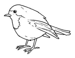 Ebn Italia Birdwatching Per Bambini Iniziare A Fare Birdwatching