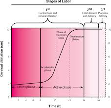 Phases Of Labor Chart Physiology Of Labor Williams Obstetrics 24e