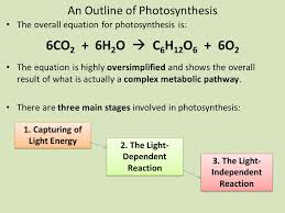3 an outline of photosynthesis