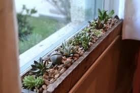 diy project ideas succulents plants indoor 20