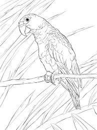 puerto rican parrot coloring page