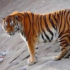 редчайших животных из Красной книги России 10 редчайших животных из Красной книги России