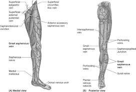Endovascular Treatment Of Varicose Veins Basicmedical Key