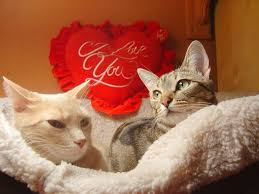 valentine cat images.  Cat On Valentine Cat Images G