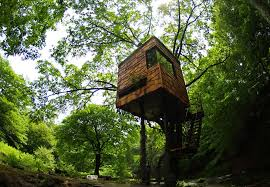 The Zen of treehouses Japans treehouse master Takashi Kobayashi