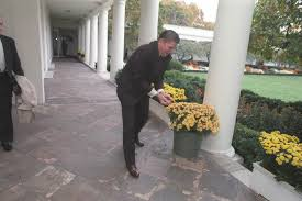 reagan oval office. President Reagan Laying Out Acorns For The Squirrels Outside Oval Office. 11/4 Office