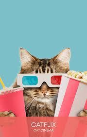 Cats 2019 4k blu ray. Catflix Cat Cinema Catmosphere