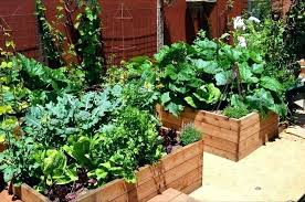 vegetable garden design ideas balcony vegetable garden ideas backyard vegetable garden design ideas kitchen garden ideas
