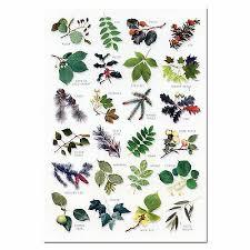 English Tree Identification Chart Tree Leaves A5 Identification Card Chart Postcard New