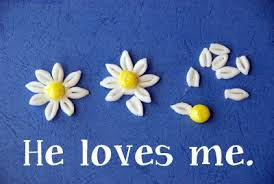 Image result for he loves me he loves me not