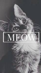 cat wallpaper iphone 6. Wonderful Iphone Meow Cute Cat IPhone 6 Wallpaper And Iphone E