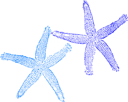 Image result for starfish drawings