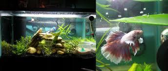 Fun Fish Tank Decorations Betta Than A Bowl Betta Fish Aquariums Betta Tank Inspiration