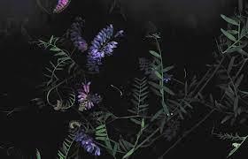dark, Floral, Flowers, Macro Wallpapers ...