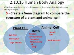 Comparing Plant And Animal Cells Venn Diagram Answers Plant To Animal Edu Objective Students Will Differentiate