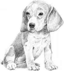 simple dog drawings in pencil. Contemporary Simple Drawing Dogs Easy Pencil Drawings Fairies With Simple Dog In H