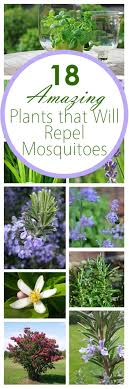 18 Amazing Plants That Will Repel Mosquitos