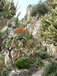 Small Picture 76 best Garden of Monaco images on Pinterest Monaco Botanical