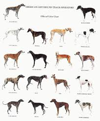 Brindle Color Chart Greyhound Color Chart Love Black Black Brindles However A